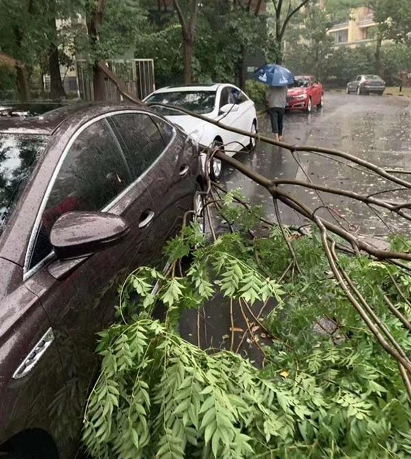 12级大风!天长暴雨引发大规模停电,多处户外设施、树木受损
