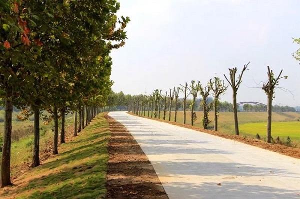 为民办实事,天长城建重点项目最新进展